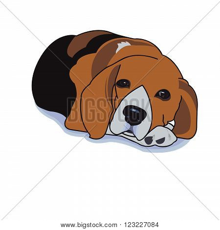 Sleepy beagle with shadow on white background,vector illustration