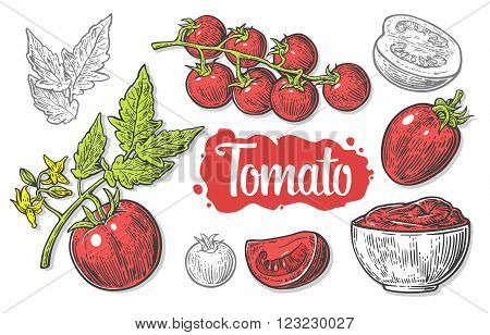 Set of hand drawn tomatoes isolated white background. Tomato half and slice isolated engraved vector illustration.
