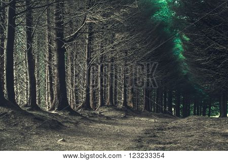 road through dark forest in Scotland, UK