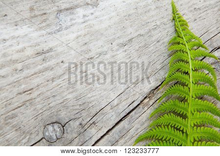 a fern leaf is an old garden table