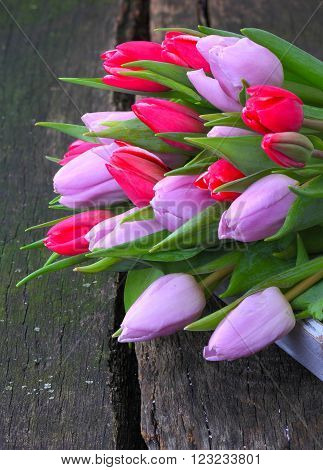 red and purple tulips on a garden table