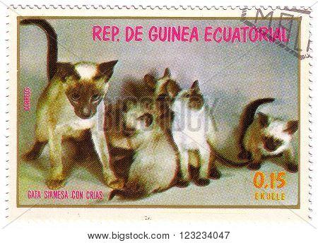 Equatorial Guinea - Circa 1974: Stamp Printed By Equatorial Guinea, Shows Siamese Cat With Kittens,