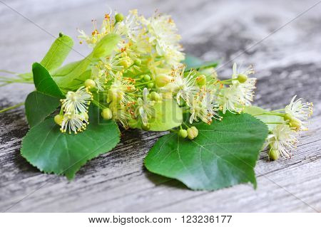 Flowers Of Linden Tree On An Old Wooden Background