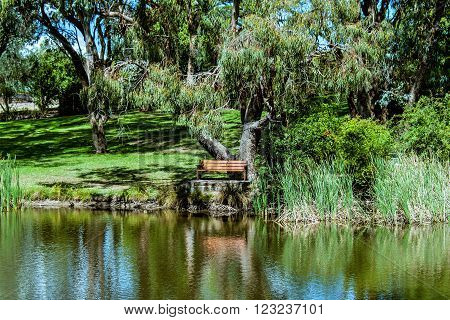 Seat by the pond, Seat under a Gum tree next to a pond in the park