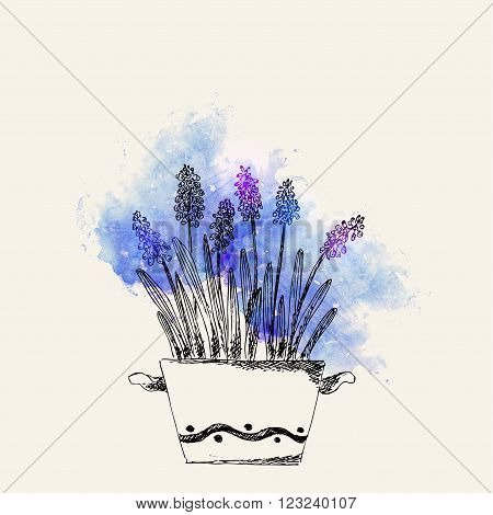 Hand drawn line art pot grape hyacinth flower and on blue watercolor splash. Spring grape hyacinth ink drawing for easter decor garden backgrounds floral design.