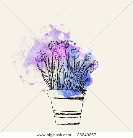 Hand drawn line art pot crocus flower on blue and purple watercolor splash. Spring crocus ink drawing for easter decor garden backgrounds floral design.