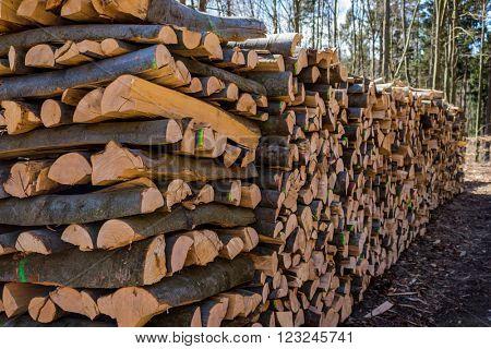 reversed-cut tree trunks