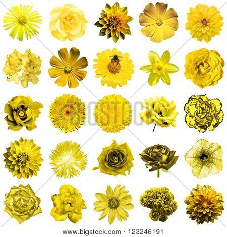 Mix Collage Of Natural And Surreal Yellow Flowers 25 In 1: Peony, Dahlia, Primula, Aster, Daisy, Ros