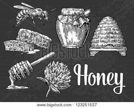Honey set. Jars of honey bee hive clover and honeycomb. Vector vintage engraved illustration.