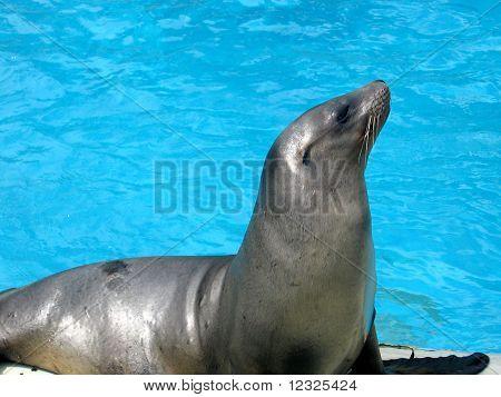 Seal on a coast.