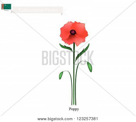 Turkmenistan Flower, Illustration of Red Poppy Flower. One of The Most Popular Flower in Turkmenistan.
