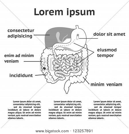 The human digestive system illustration of splitting pills