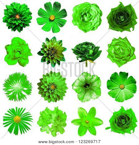 Mix Collage Of Natural And Surreal Green Flowers 16 In 1: Peony, Dahlia, Primula, Aster, Daisy, Rose