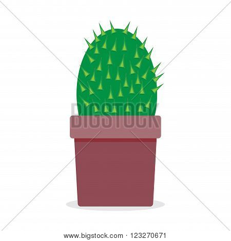 Plant cactus isolated. Cactus isolated nature thorn cactus in pot flora natural Mexican cactus. Vector abstract flat design illustration