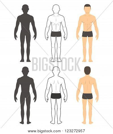 Male body chart. Muscular man front and back in silhouette line and color. Isolated vector illustration.