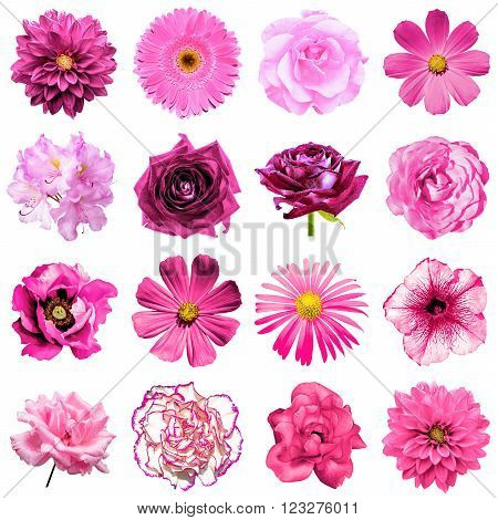 Mix Collage Of Natural And Surreal Pink Flowers 16 In 1: Peony, Dahlia, Primula, Aster, Daisy, Rose,