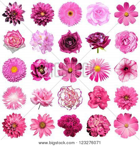 Mix Collage Of Natural And Surreal Pink Flowers 25 In 1: Peony, Dahlia, Primula, Aster, Daisy, Rose,
