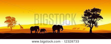 Safari panoramic