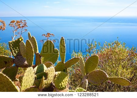 The Mediterranean Sea at Taormina with cactuses in the front