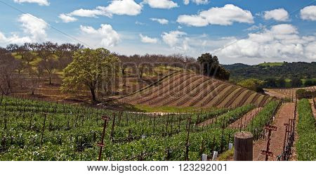 Paso Robles Wine Country Vineyards and Scenery in Central California USA