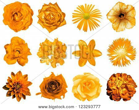 Mix Collage Of Natural And Surreal Orange Flowers 12 In 1: Peony, Dahlia, Primula, Aster, Daisy, Ros