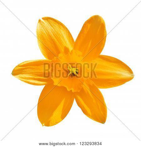Orange Flower Day Lilies Hemerocallis Macro Isolated On White