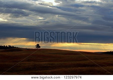 Lone solitary tree at sunset in Wind River National Park in the Black Hills of South Dakota USA