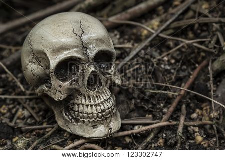 human skull in forest darkness concept for horror halloween