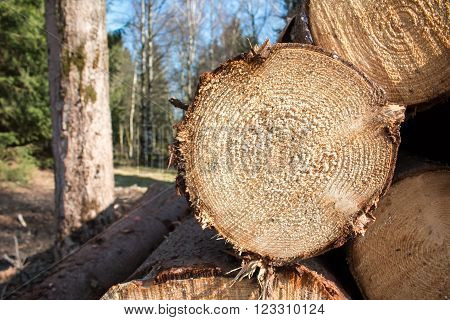 Logs crosscuts on the timber cutting in the forest