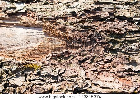 close up of old aged weathered cracked wood profile surface texture
