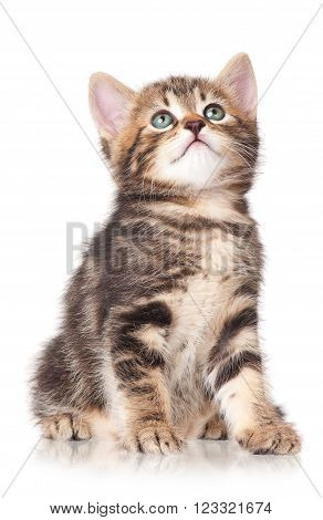 Cute little kitten isolated on a white background cutout