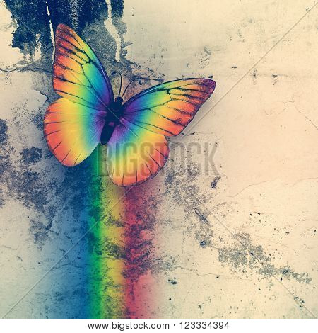 bright rainbow butterfly on dirty grange wall