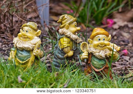 Three Garden Gnomes - each of the dwarfs looking at different directions standing on the grass in the garden amid the flowers