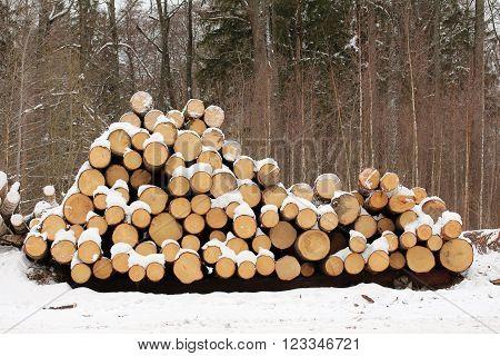 Tree Logs. Tree felling in the winter