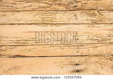 wood termites destroyed. For the background image