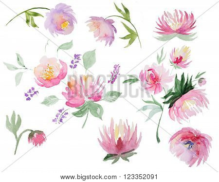 Collection of abstract watercolor peones. Set of beautiful watercolor flowers of peones on white background. Perfect for wedding invitations, greeting cards, quotes, blogs, posters and DIY.