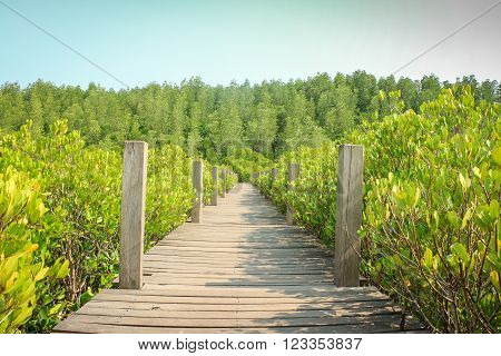 Walkway wooden bridge through mangrove forest Landscape of wooden bridge with forest background