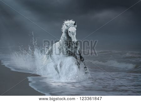 Gray horse run on the seacost in the water splash