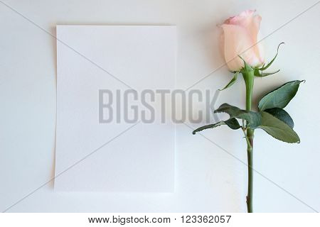 Pink Rose and Blank paper Mockup. Desktop workplace designer artist painter top view. modern trend template for advertising. Mockup layout template for brochure banner space for text.