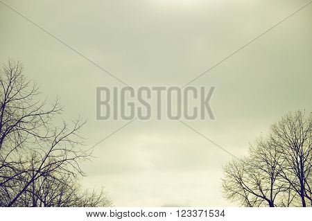 A leafless tree forest against a grey moody sky. Negative space background and an empty copy space for editor's text.