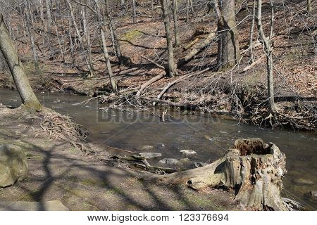 a small stream that runs past a rotten stump ** Note: Soft Focus at 100%, best at smaller sizes