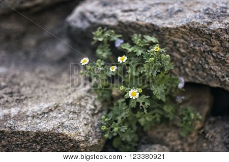 Desert Plant, California