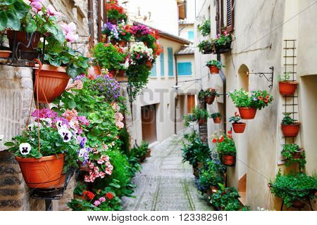 charming street decoration with plants and flowers in medieval town Spello (Umbria, Italy)