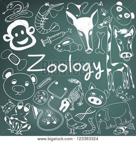 Zoology biology doodle handwriting icons of animal species and education tools in blackboard background for science presentation or subject title create by vector