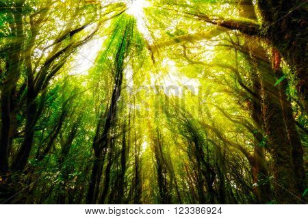 exuberant trees in rainforrest with sun ray for use as nature background