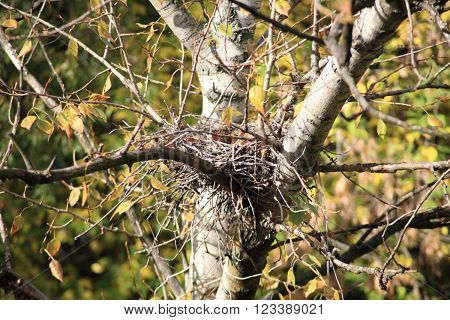 image of one convolute nest on tree