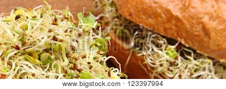 Fresh baked wholemeal bread roll with alfalfa and radish sprouts, concept of healthy lifestyle diet food and nutrition