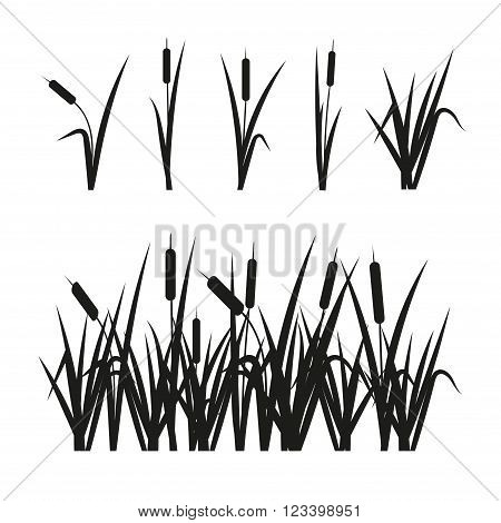 Reeds set. Design elements isolated on white background.