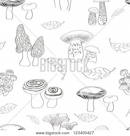 Mushrooms seamless pattern. Hand drawn russulles. morels, porcini, chanterelles and agarics isolated on white. Repeating vector background.