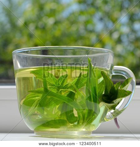 Green tea - broth with tarragon and mint